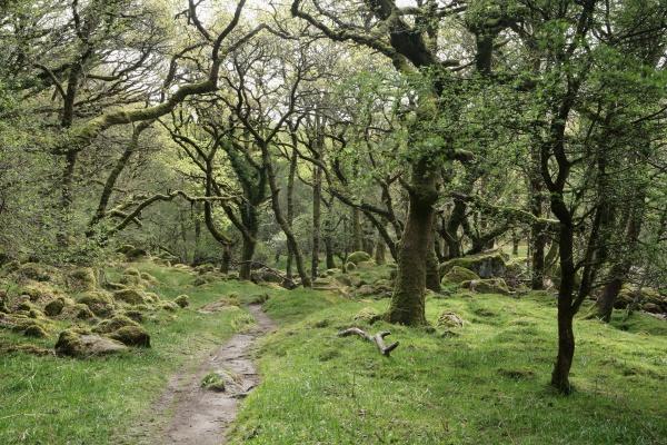 River Dart On Dartmoor Part 2